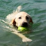 La_Pineta_Blu _Dog_Beach_cane-in-acqua