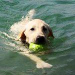 La_Pineta_Blu _Dog_Beach_cane-in-acqua