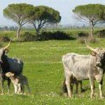 La-Maremma (9)