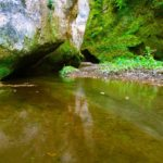 Selva-del-Lamone_natura