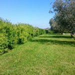 Podere_del_sole_giardino
